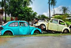 Unloved Bugs (*Amanda Richards) Tags: old cars car metal vintage rust beetle scrap volkswagon lovebug