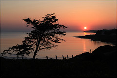 Coucher de soleil (rogermarcel) Tags: ocean sunset orange tree landscape paysage arbre silouhette waterscape rogermarcel