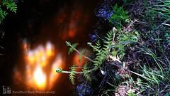 20160505_123522 copie (C&C52) Tags: nature landscape eau paysage extrieur plantes phoneshot fougres ruisseau