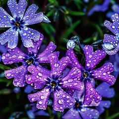 IMG_9599tzl1scTBb2LGE (ultravivid imaging) Tags: flowers canon colorful vivid imaging ultra ultravivid canon40d ultravividimaging
