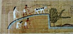 Papyrus of Ubekhet and Tadimut - Deir el-Bahri. Dynasty 21. - Cairo Museum Egypt (Amberinsea Photography) Tags: egypt cairo papyrus cairomuseum bookofthedead thebookofthedead amberinseaphotography