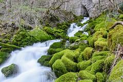 Skaklya river (Rivo 23) Tags: water river waterfall path bulgaria gorge bov    iskar   skaklya   vazovs
