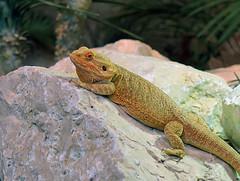 Let's rock! (Wim van Bezouw) Tags: nature animal rocks outdoor amphibian