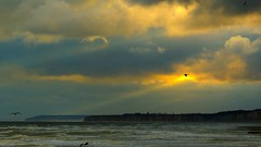 Fly into the sunrise (KerKaya) Tags: leica blue light sea sky sun seascape nature water clouds sunrise landscape lumix coast flying seaside waves mood infinity seagull cliffs panasonic shore serenity normandy kerkaya