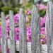 Spring Fence [134/366]