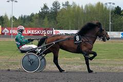 IMG_2297 (lovelymelancholy) Tags: horses horse hevoset hevonen horseraces ravit imrautio ravihevonen