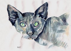 Sphynx (Khalaziy) Tags: pencil ink cat watercolor sphynx