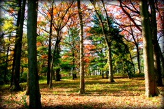 The Soft Autumn Look (Lynn 3nglish, catching up) Tags: autumn leaves forest solovely softnessadded