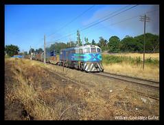 Victoria!!! (Fepasas en la Araucania) Tags: tren fepasa 16000