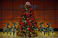 The Fullerton Hotel (chooyutshing) Tags: christmas decorations festive singapore xmastree 2011 thefullertonhotel