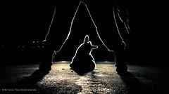 Rencontre dangereuse Style 2/2 (By Corsu) Tags: light shadow france car silhouette by night composition canon dark eos blood kill fake voiture killer sang rangers nuit phare lapin militaire 2b rencontre pénombre peluche lightroom suspense twingo 1600iso tueur peur effet âne couteau arme preset dangereuse corsu meurtre 550d treilli
