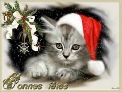 Châtaigne (home77_Pascale) Tags: christmas cat chat fête noël carte chaton ecard châtaigne cartevirtuelle doubleniceshot tripleniceshot aboveandbeyondlevel1 aboveandbeyondlevel2