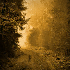Towards Light (Raf...) Tags: road trees texture forest finland square ie ourtime digitalartwork contemporaryartsociety artistictreasurechest magicunicornverybest magicunicornmasterpiece sailsevenseas sailsevenseasmaster coppercloudsilvernsun rockpaperexcellence rememberthatmomentlevel4 rememberthatmomentlevel1 rememberthatmomentlevel2 rememberthatmomentlevel3 rememberthatmomentlevel5 rememberthatmomentlevel6 vigilantphotographersunite vpu2 vpu3 vpu4