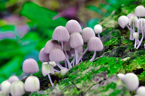 Examples Of Fungi In The Philippine Jill Scott Insomnia