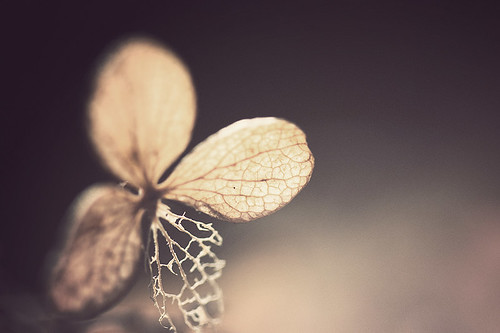 Three and a half (Mathijs Delva) autumn macro nature closeup dead weed end died driedup 100mmf28