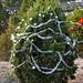 360_Trees_2011_086