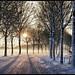 Winter Wonderland (part 2)