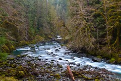 North Fork Skokomish (Dalo2013) Tags: lakecushman hoodcanal olympicnationalforest staircaserapids