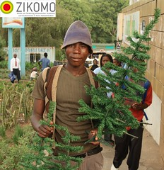 Young Malawian selling christmas trees / Christmas in Africa ( Philipp Hamedl) Tags: africa christmas xmas tree weihnachten advent market african christmastree malawi afrika markt weihnachtsbaum merrychristmas celebrate selling baum schmuck verkaufen tannenbaum merryxmas christbaum blantyre froheweihnachten happyxmas afrikanisch malawian zikomo christmasinafrica malawisch christmasinmalawi weihnachteninafrika weihnachteninmalawi