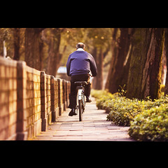 Leisurely Ride (brandonhuang) Tags: road trees light plants sun sunlight plant man tree leaves sunshine bike bicycle wall canon golden leaf bush warm dof shine ride bokeh path riding biking f2 bushes pathway 135mm 500d f2l brandonhuang