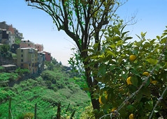 Corniglia and Lemon Tree