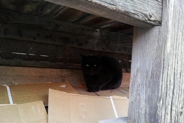 Today's Cat@2011-12-31
