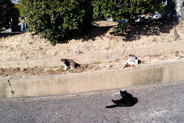Today's Cat@2012-01-03