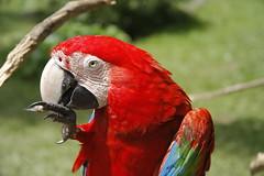 _MG_1836 (James_Roberts) Tags: bali holiday october 2011 tamanburungbalibirdpark