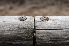 Frozen (1) (losvizzero) Tags: wood winter cold ice screws switzerland ticino frost crystals symmetry muzzano 15challenges 15challengeswinner southernswitzerland friendlychallenges friendlychallengeswinner