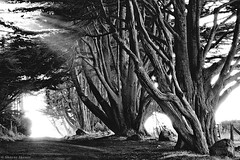 The Way To Go by Shayne Skower - Black and white Fine Art prints for sale (SkowerPhotography) Tags: pictures sanfrancisco california new trees blackandwhite sun white black tree art oklahoma nature beautiful beauty lines sunshine minnesota birds northerncalifornia oregon landscape happy landscapes blackwhite monterey amazing texas natural photos unique wildlife marin country decoration relaxing shapes trails fences pic images professional huge kansas prints cypress hd rays pointreyes norcal roads tunnels stinsonbeach barbwire epic limitededition tranquil westmarin sanfransisco anseladams stinson washinton highquality housedecorations bueatiful vulchers birdobservatory marincalifornia santafrancisco shayneskower californiavulcher
