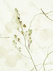 Un peu d'hiver. A little bit of winter (Amiela40) Tags: winter white snow hiver softness neige blanc tenderness tendresse douceur blancheur simplicit contemporaryartsociety whaticallart greenbeautyforlife