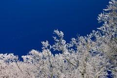 "Nel blu, dipinto di ...... bianco ("" paolo ammannati "") Tags: sky italy panorama snow me alberi forest bravo italia shot natura io bleu cielo tuscany neve toscana inverno colori verna rami bosco casentino ghiaccio foresta faggio paoloammannati effettinaturali fotoconneve panoramaconneve"