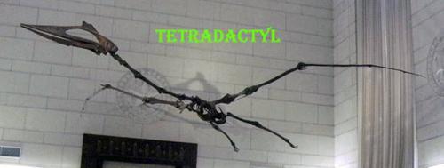 tetradactyl