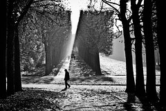 Between lines and shadows (PhotobyVro) Tags: park trees bw france silhouette walking landscape europe shadows nb arbres paysage parc sceaux