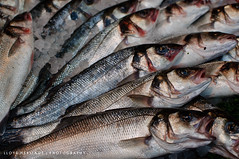 Borough Market (Lloyd Heritage) Tags: uk england fish london nikon europe market boroughmarket borough d5000