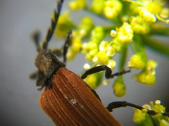 Insect in the garden (ABC Open Central West NSW) Tags: macro closeup lens photography luke wong eyeglasses upclose magnifying loupe