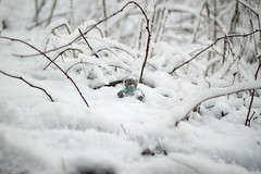 The first real snow!!! (KaterRina) Tags: bear white snow nature toy 50mm oneobject365daysproject pukatukas