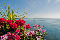 THE MOORING (DESPITE STRAIGHT LINES) Tags: flowers sea water leaves sailboat boat nikon day market yacht clear bloom blooms sidney sidneybc d700 sidneybythesea ilobsterit