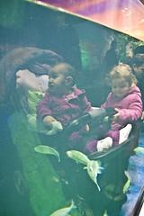IMG_8873 (mert alp ztrk) Tags: ocean life sea fish nature water silhouette coral kids children wonder zoo aquarium shark amazing natural under cities twin istanbul trail tropical reef poseidon tropics bule tang atlantik elif arapaima akvaryum florya balk tropik istanbulaquarium istanbulakvaryum svey istabulakvaryum