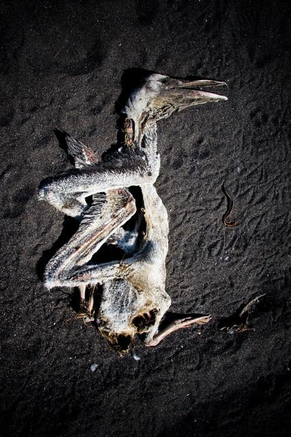 naturaleza muerta006