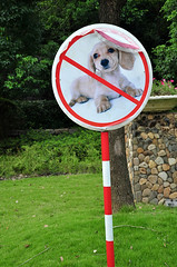 No Dogs Allowed (cowyeow) Tags: china park dog pet pets silly cute dogs strange grass goofy animal sign warning puppy asian weird puppies funny asia peeling dumb humor chinese bad animalrights rules wrong forbidden badsign laugh stupid hangzhou oops wtf sick funnysign fail nodogs linan jinjiang funnychina
