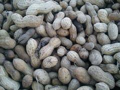 nazarmna           ground nut (Dr.nazarmna) Tags: sudan khartoum          nazarmna