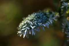 20120127_F0001_2400: A leaf covered with frost looks like a hedgehog (wfxue) Tags: winter plant cold macro ice nature leaf frost crystal bokeh hexagonal sparkle hexagon