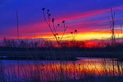 Silhouettes (Kansas Poetry (Patrick)) Tags: sunset bakerwetlands wakarusawetlands patrickemerson wwwpatrickemersonzenfoliocom patrickcaptainkilltimewaitingfornano