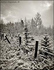 Winter (Artvet) Tags: