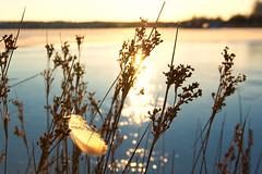 Die Feder (dubdream) Tags: sea seascape water germany landscape nikon shoreline balticsea ostsee schleswigholstein heiligenhafen explored d700 dubdream