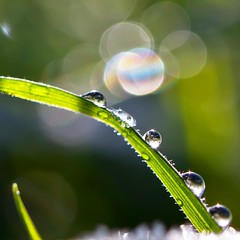 Waterdrops and bokeh