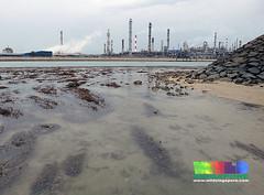 Living reefs of Pulau Hantu (wildsingapore) Tags: nature landscape marine singapore underwater wildlife coastal shore threats intertidal seashore refinery pulau industries marinelife hantu wildsingapore