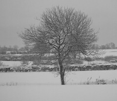 Snow tree BW (P.P.P ( point - press - pray )) Tags: snow tree lincolnshire bwphoto winterscene