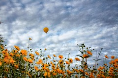 Yellow (Jungle C) Tags: flowers sky yellow clouds germany landscape topv1111 hotair saxony balloon creativephotography 3000v120f elbevalley world100f bestcapturesaoi elitegalleryaoi